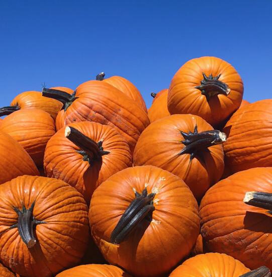 Sacramento, CA Best Pumpkin Patches