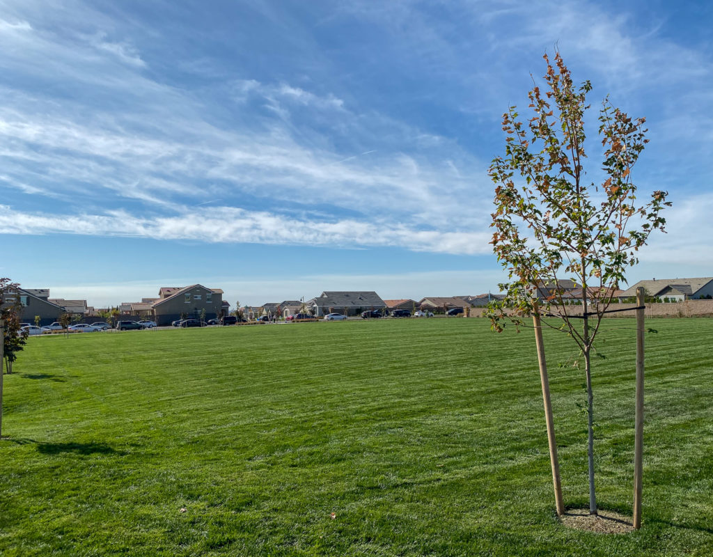 Large open space at Willard Park in Whitney Ranch