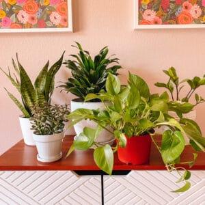Best Houseplants for Beginners