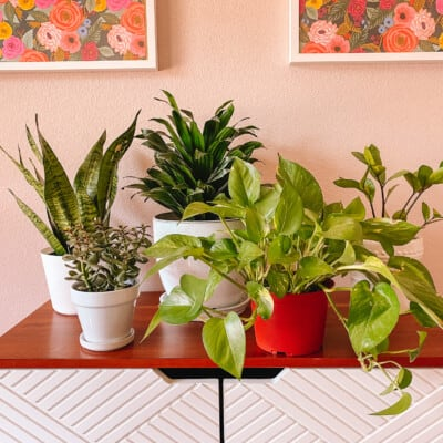 Best Houseplants for Beginners: Our Favorites