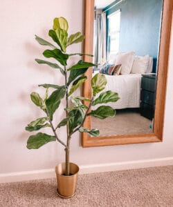 Best Houseplants for Beginners: Faux Fiddle Leaf Fig