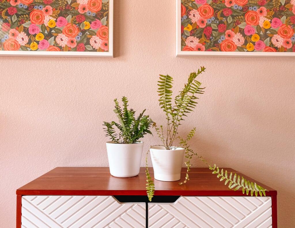 Best Houseplants for Beginners: Two varieties of ferns
