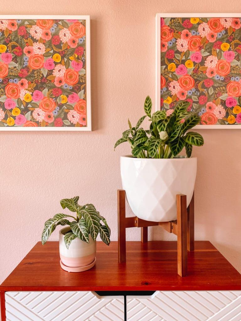 Best Houseplants for Beginners: Zebra Plants