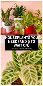 houseplant image for pinterest