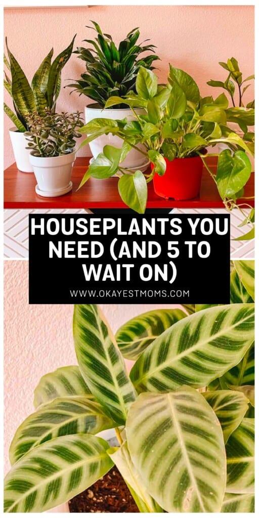 houseplant image for pinterest